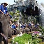 曼谷三攀大象鳄鱼园 . 颠覆你的旅行体验