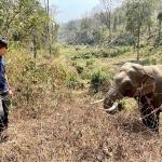 获救大象12年后竟「认出恩人」